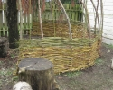 Apple tree Willow wall