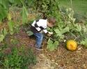 Organic Veggie Garden