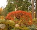 Heritage Tree -2