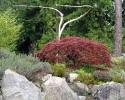 Heritage Tree -6