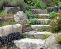 Upper Lawn Steps -6