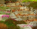 Detail- Stone Steps and Ground Cover