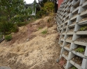 native planting on remaining steep slope